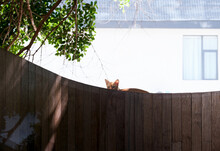 Secretly Observing The Kitten In The Yard, On The Wall Of The Outdoor Yard