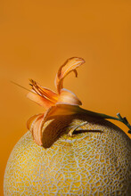 Still Life Flower And A Fruit