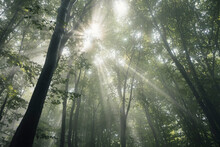 Sun Rays In Enchanted Foggy Forest