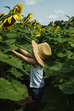 Little Girl Picking Large Sunflowers In A Field.