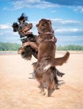Bawiące Sie Psy