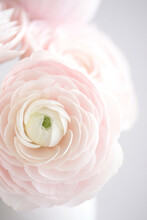 Close-up Of A Beautiful Pastel Pink Roses Bouquet