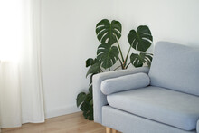 Modern Living Room In White With A Gray Sofa. Scandinavian Interior Design. Monstera Flower In The Corner. High Quality Photo