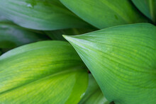 Beautiful Green Leaves And Leaves Background