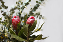 Close Up Shot Of Two Pink Protea Flowers.