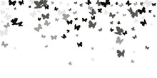 Magic Black Butterflies Abstract Vector Illustration. Spring Ornate Insects. Decorative Butterflies Abstract Children Wallpaper. Gentle Wings Moths Patten. Garden Beings.