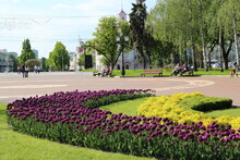 Flowers On Flowerbed In City Park. Flowerbed Decoration