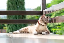 Gato Blanco Tomando El Sol En Un Balcón