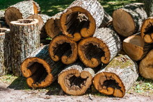 The Ends Of A Sawn Tree Trunk Close Up In Summer