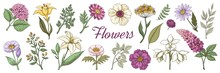 Hand Drawn Flowers. Floral Vintage Bouquet, Garden Flower Set For Posters And Wedding Cards. Vector Doodle Nature Collection