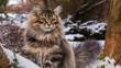 Kot Syberyjski w zimowym otoczeniu