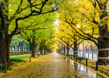 Autumn, Tree, Park, Fall, Nature, Trees, Forest, Leaves, Landscape, Season, Road, Yellow, Path, Leaf, Foliage, Outdoors, Orange, Alley, Golden, Garden, Sunlight, October, Color, Walk,