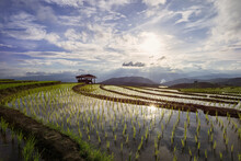 Terraced Paddy Field In Mae-Jam Village , Chaingmai Province , Thailand,Beautiful Scenery During Sunset Of The Pa Pong Piang Rice Terraces At Mae-Jam,Chaingmai Province In Thailand.
