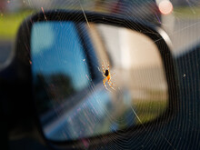 Spider On A Web In A Car In The Sun