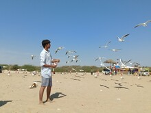 Side View Of Man Feeding Seagulls While Standing At Beach Against Sky