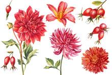 Set Of Watercolor Flowers, Botanical Illustrations, Autumn Dahlias, Chrysanthemum, Wild Rose