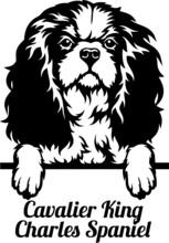 Cavalier King Charles Spaniel Peeking Dog - Head Isolated On White