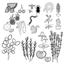 Vector Drawing Graphic Element Of Insects, Flowers, Plants, Herbs, Vegetables And Fruits In Black And White Icon. Minimal Illustration Garden Theme Art Set.