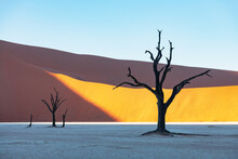 Dead Camelthorn Trees At Sunrise, Deadvlei, Namib-Naukluft National Park, Namibia, Africa. Dried Trees In Namib Desert. Landscape Photography
