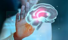 Light, Brain, Jellyfish, Energy, Power, Water, Blue, Science, Magic, Ball, Mind, Hand, Sea, Technology, Loop, Design, X-ray, Fractal, Concept, Pattern, Wallpaper, Lights, Medicine,