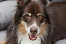 Dog, Collie, Pet, Animal, Canine, Border Collie, Sheltie, Sheepdog, Puppy, Mammal, Breed, Shetland, Domestic, Sitting, Black, Border, Pedigree, Purebred, Adorable, Studio,