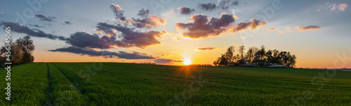 Wiosenny zachód słońca nad polem żyta