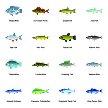 Flat Icons Of Fish Types