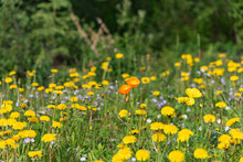 A Field Of Wild Flowers Seen In An Open, Outdoor Area During Summer With Yellow, Orange And Purple Flora.
