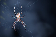 Spider Weaves A Web. Abstract Blue Background. Halloween Concept.
