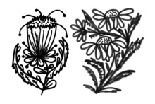 Floral Plants, Stems, Leaves, Inflorescences, Illustrations With Black Strokes On A White Background For Print And Design