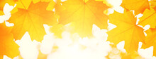 Tree Leaf. Banner Autumn Yellow Maple Leaves On A Branch In The Park. Yellow Background In Sunbeams With Bokeh. Beautiful Natural Landscape In The Afternoon.