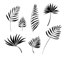 Vector Nature Set Of Different Silhouette Of Black Palm Leaves Isolated