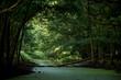 Potok płynący przez zielony las
