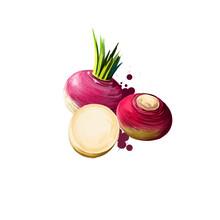 Rutabaga Or Swede Root Vegetable Swedish Turnip, Neep. Rutabaga Or Brassica Napus Isolated. Organic Healthy Food. Red Root Vegetable. Hand Drawn Graphic Design Element. Digital Art Illustration.