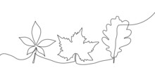 Fallen Leaves Continuous Line Drawing Set. One Line Art Of Tree Leaves, Herb, Plants, Chestnut, Maple, Oak.