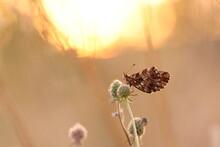 Una Farfalla Su Un Fiore Al Tramonto