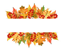 Watercolor Autumn Leaves And Berries Isolated On White Background. It Can Be Used For Banners, Cards, Packaging, Advertising, Autumn Sales