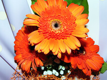 Bouquet Of Barberton Daisy Flowers
