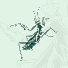 Hand Drawn Grasshopper Sketch Symbol. Vector Mantis Element In Trendy Style. Hand Drawn, Sketch, Cartoon Illustration Of Grasshopper.