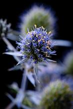 Dew, Thorn, Flower, Drops, Grass, Fluff,dandelion, Bubble