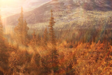 Abstract Landscape Background Autumn Sun Glare Defocus Bokeh, View Sun Background
