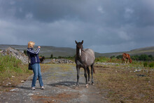 Photographing A Horse. Horses. Ireland. South West Coast. Ocean. Burren Region In County Clare