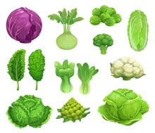 Cartoon Vector Cabbage And Cauliflower Vegetables, Fresh Farm Food. Green And Red Cabbage, Lettuce, Broccoli And Kohlrabi, Kale, Brussel Sprouts And Romanesco, Bok Choy And Savoy Cabbage