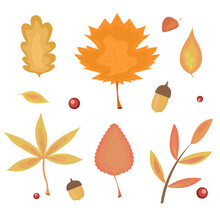 Set Of Autumn Leaves In Orange, Yellow And Red Colors. Isolated On White Background With Rowan Berries And Acorns. Collection Of Vector Illustrations Of Leaves Of Maple, Oak And Other Plants