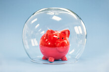 Protecting Your Savings, Goldfish Bowl Covering A Piggy Bank