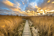 Wooden Walkway Through Tidal Marsh