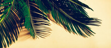 Palm Leaves On Yellow Background. Cycas Revoluta
