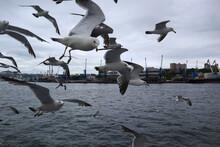 Vladivostok City, Station Of Sea Coastal Communications. Seagulls Meet Travelers.