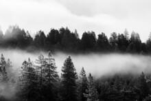 Dense Fog Running Through A Valley Of Trees