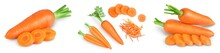 Carrot Isolated On White Background . Set Or Collection